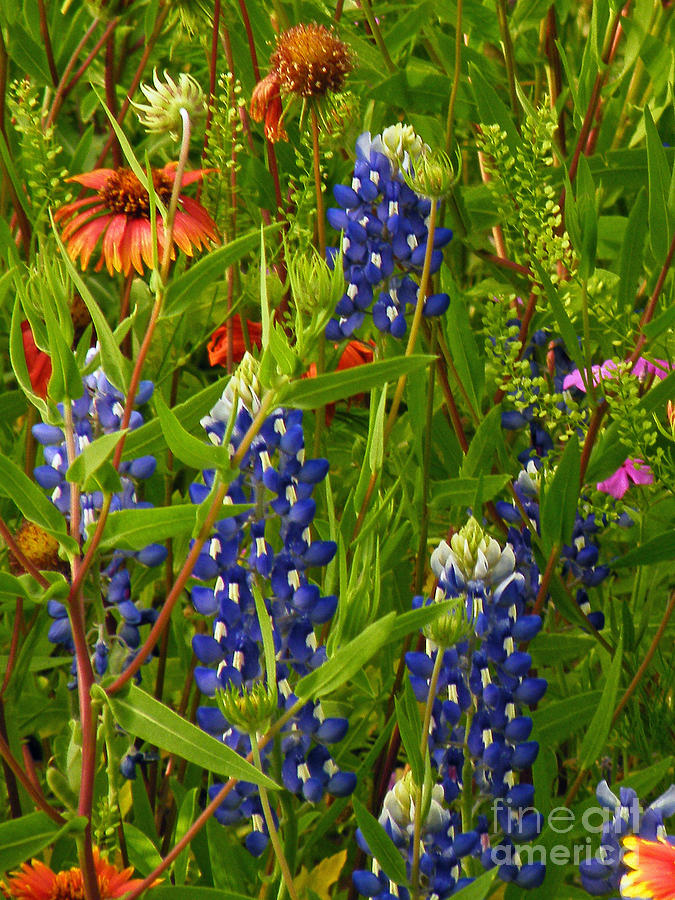 Spring Mix Photograph