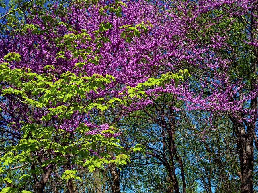 Spring Morning Photograph