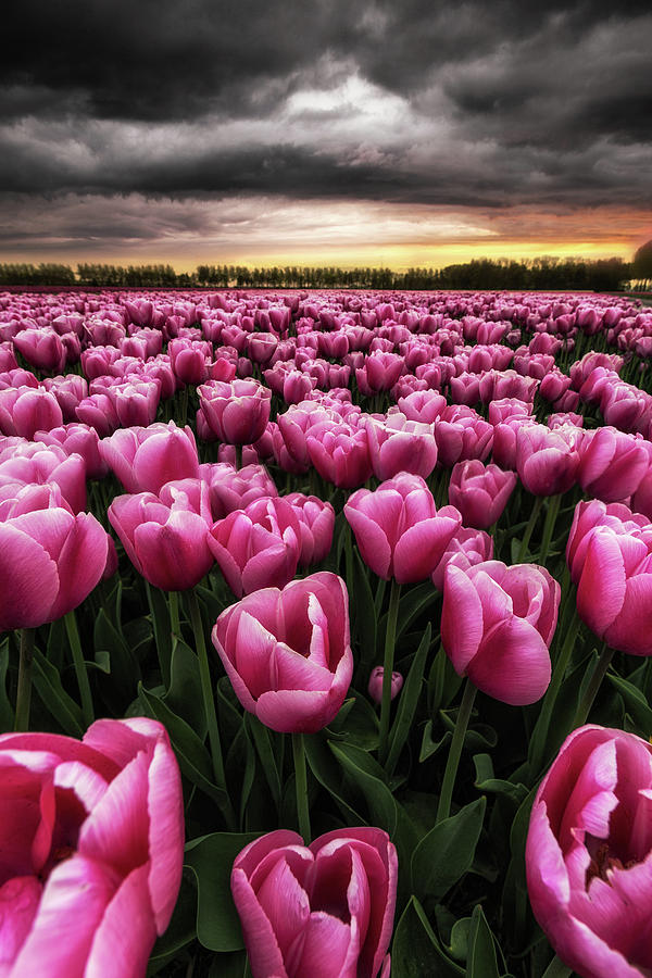 Spring Palette Photograph