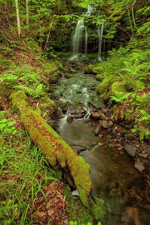 Spring Ravine and Waterfall by Irwin Barrett