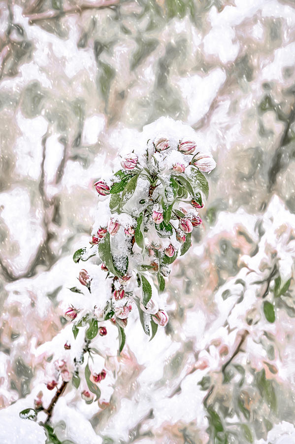 Spring Snow by Jennifer Grossnickle