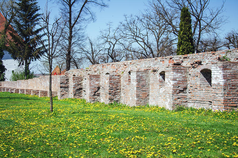 Green Grass Photograph - Spring time Yellow dandelions, green grass and old castle brick walls in Targu Mures, Romania by Cosmin Albu