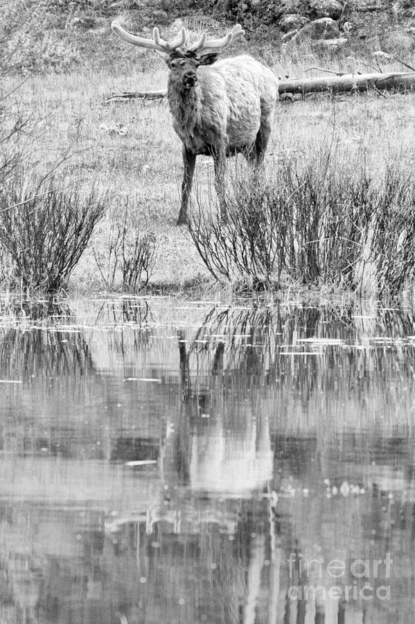 Spring Velvet Reflections Black And White by Adam Jewell