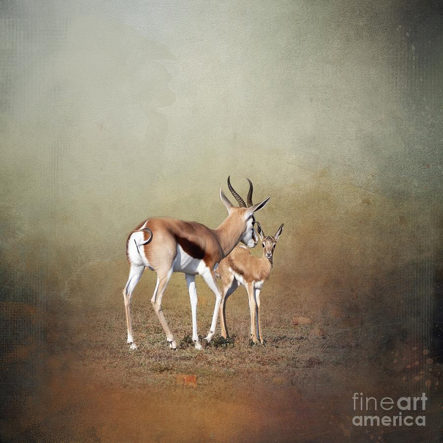 Springbock Art by Eva Lechner