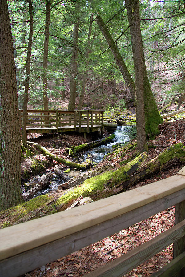 Springs In The Woods Photograph