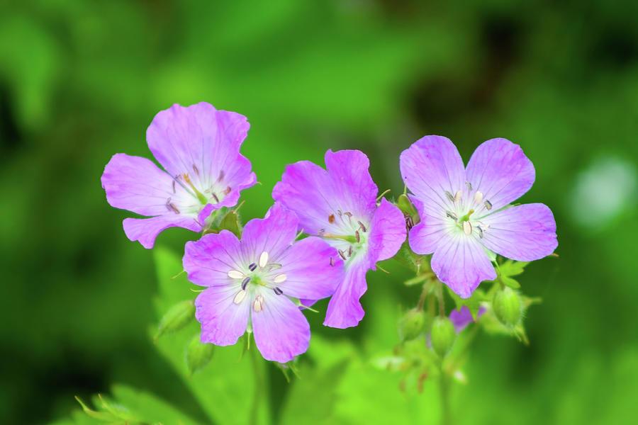 Springtime Beauty Photograph