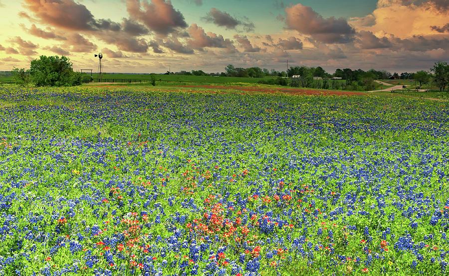 Springtime Wildflowers In Texas Photograph