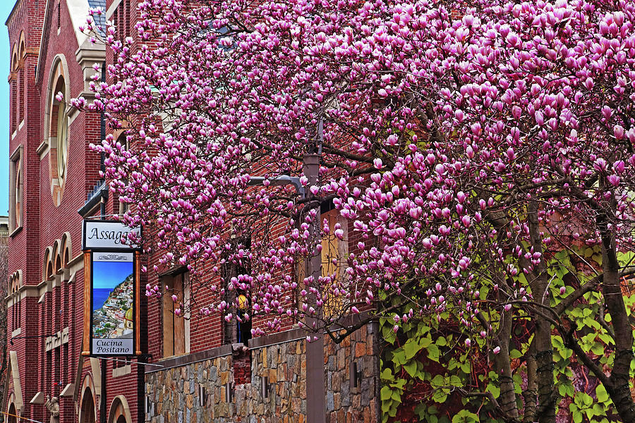 Springtime in the North End Boston MA by Toby McGuire