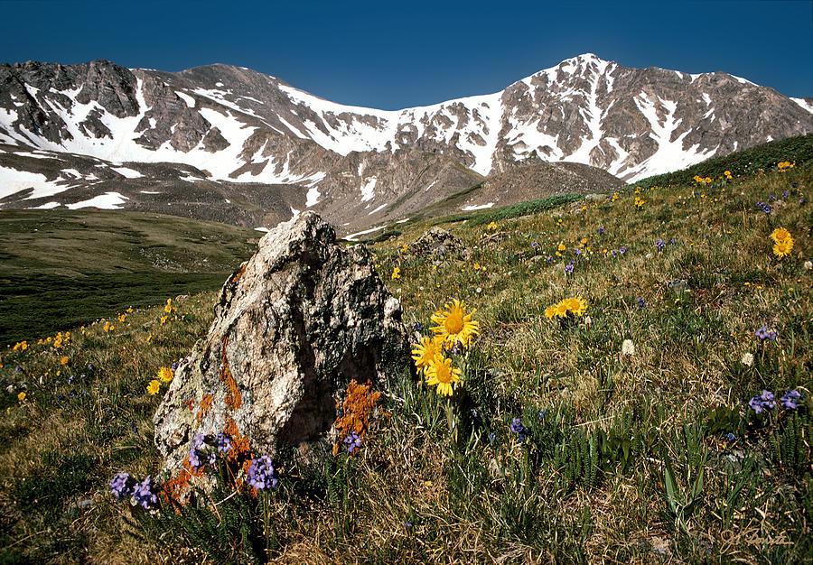 Colorado Photograph - Springtime in the Rockies by Joe Bonita