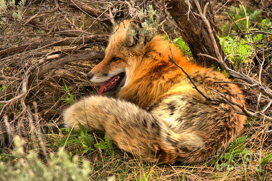 Springtime Nap by Adam Jewell