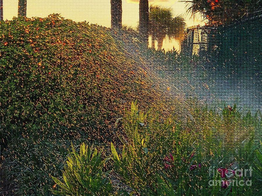 Dawn Photograph - Sprinkled by Eddy Mann
