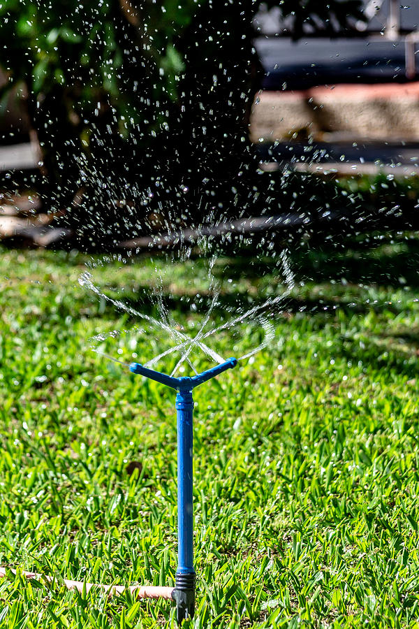 Sprinkler all over the lawn. Photograph by CRMacedonio