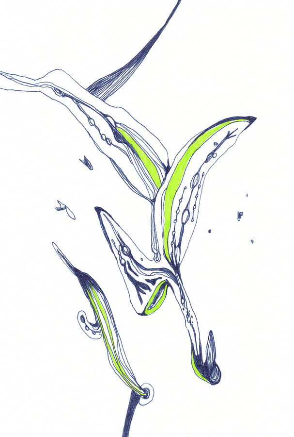 Lines Drawing - Sprout - #SS20DW014 by Satomi Sugimoto