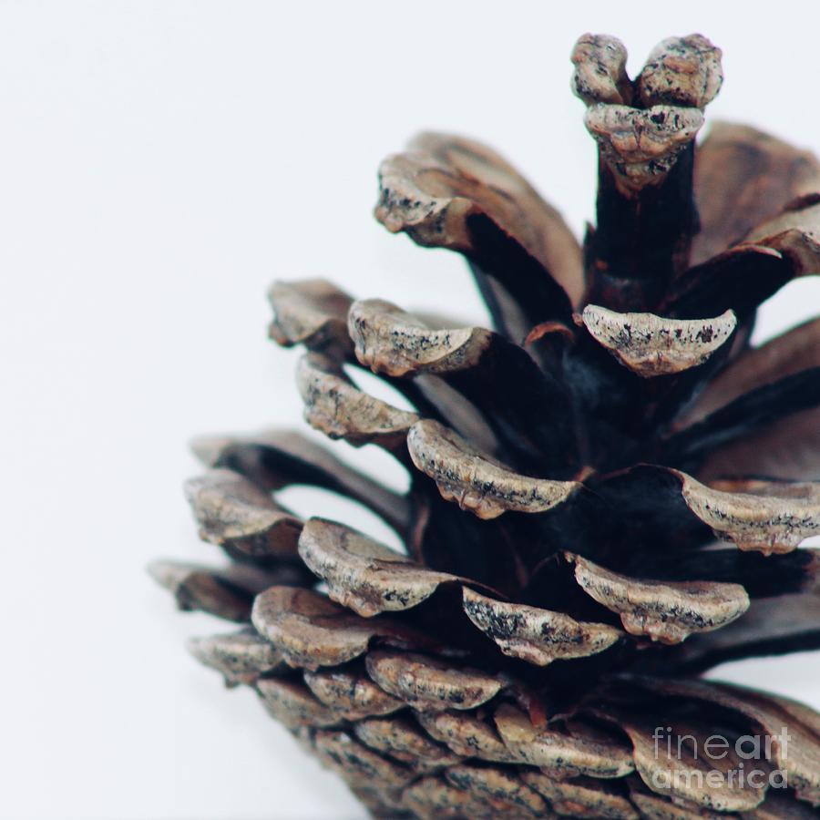 Sqare Pine Cone 713 Photograph