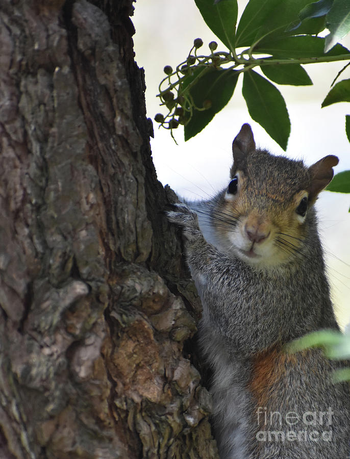 Squirrel Photograph - Squirrel Ask for More Nuts by Rose De Dan