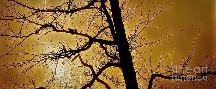Squirrel Silhouette Photograph