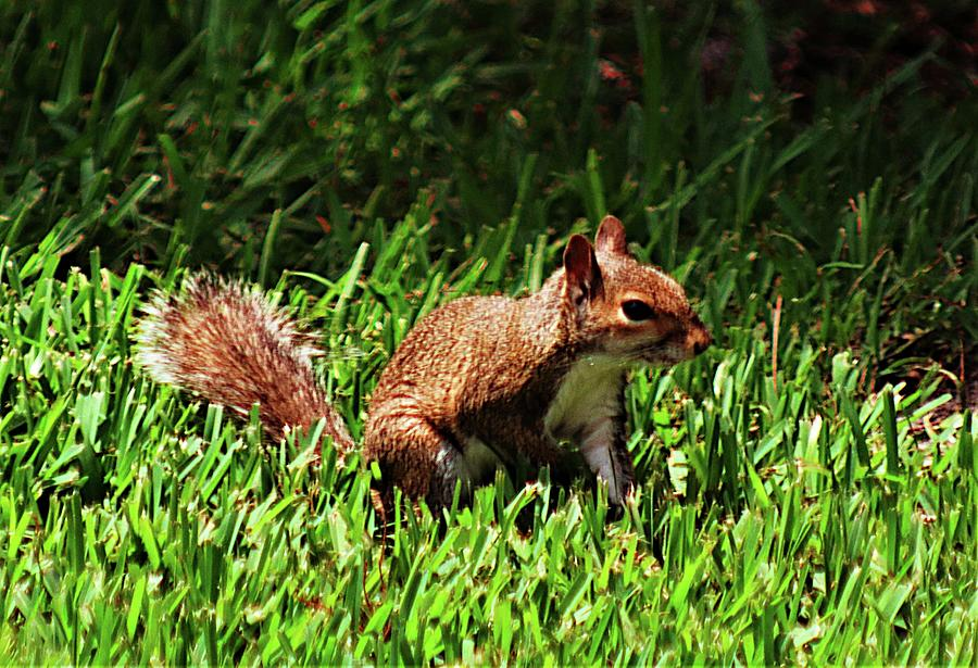 Squirrelly Photograph