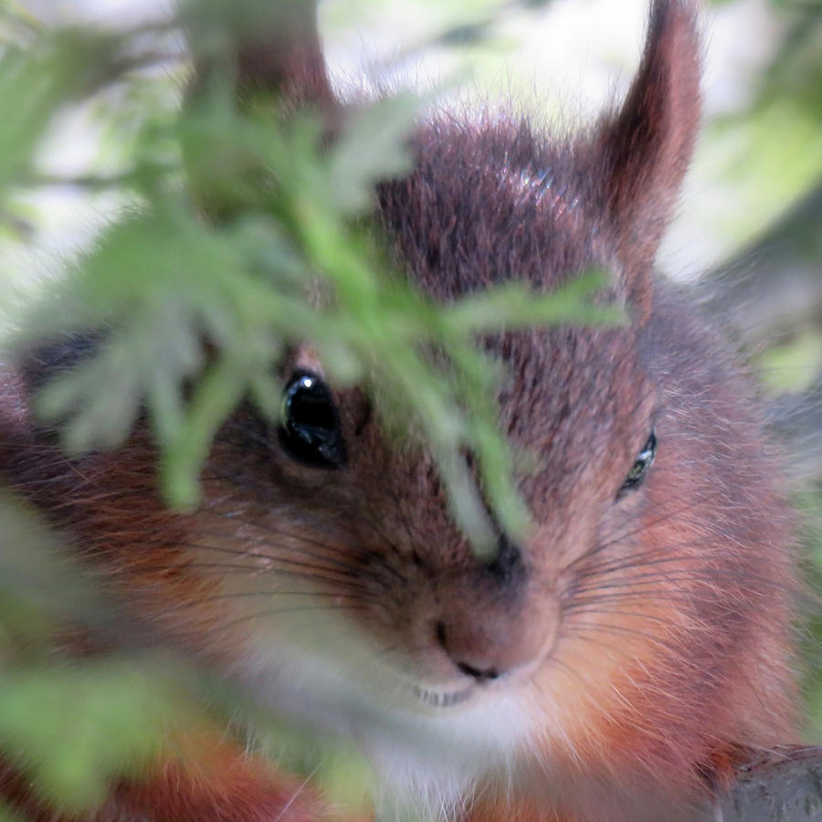 Squirrels Are Cute Photograph