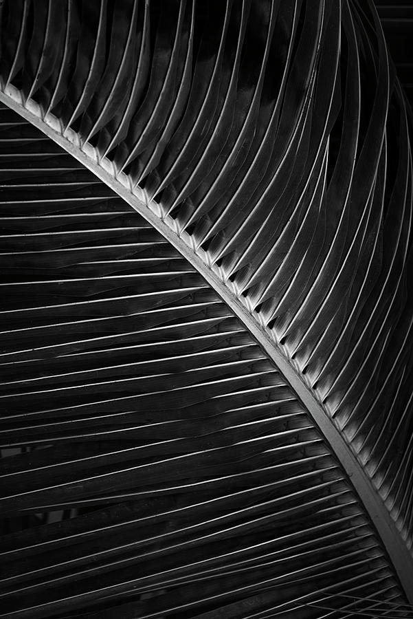 _ssk6103 Strong Hold B/w Photograph