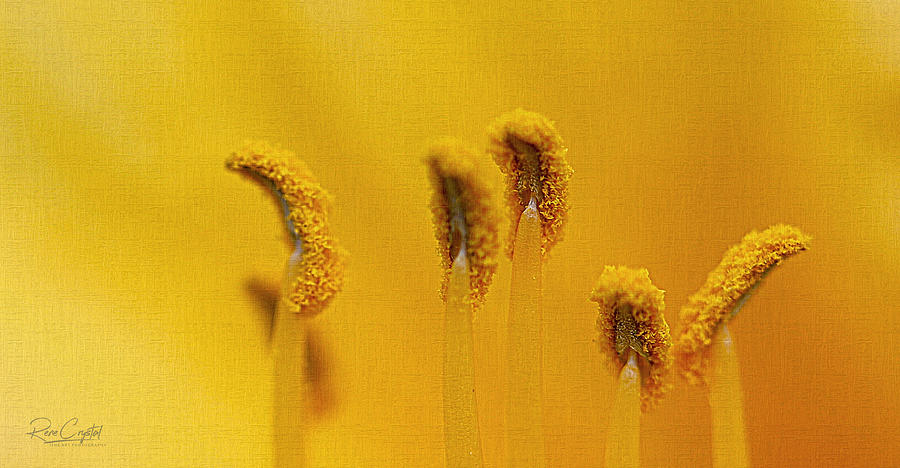 Stand Tall Stamen Soldiers by Rene Crystal