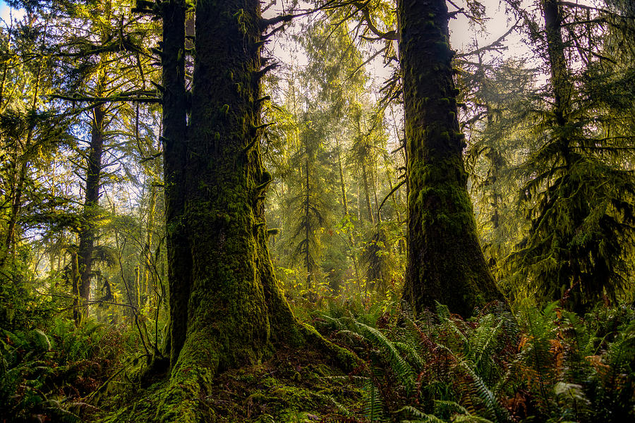 Standing among Giants by Bill Posner