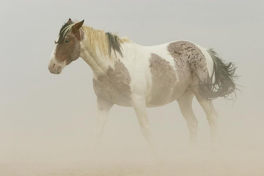 Horse Photograph - Standing Strong by Kent Keller
