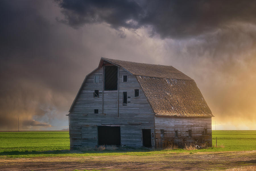 Standing Up To The Storm Photograph