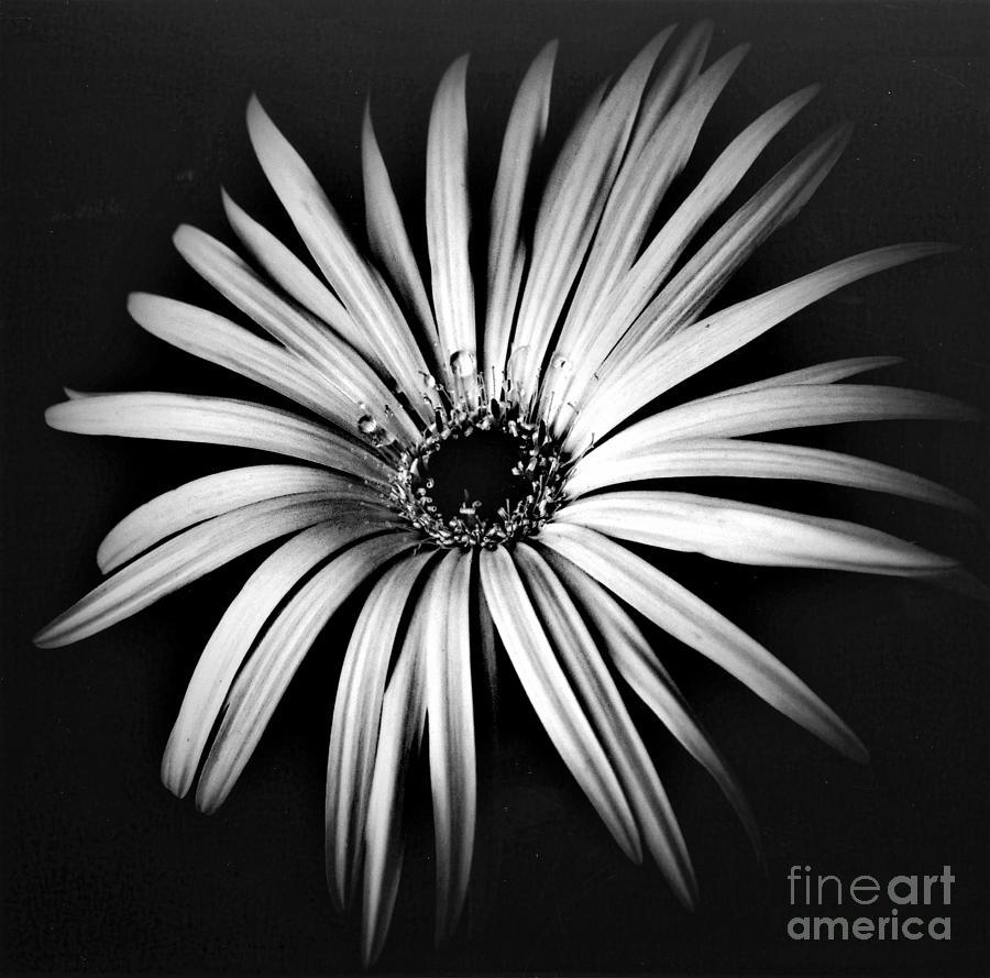 Black Photograph - Star by Alex Caminker