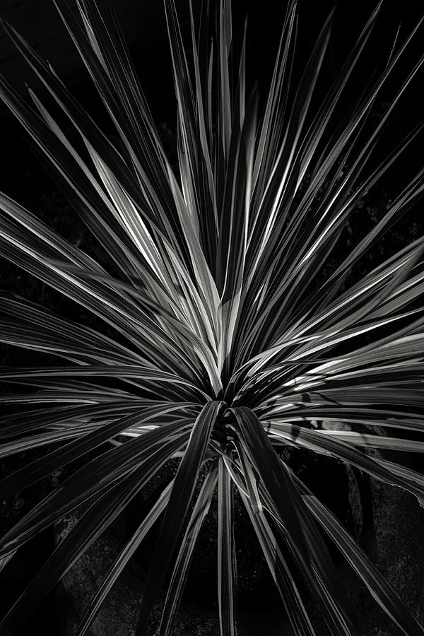 Plants Photograph - Starburst by Joseph Smith