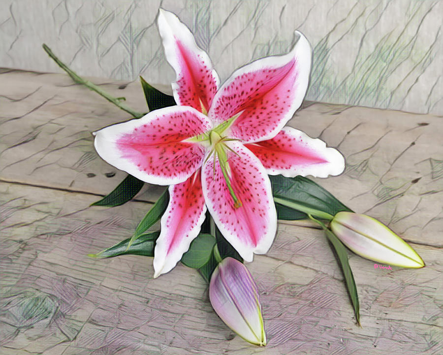 Flower Digital Art - Stargazer Lily watercolor by Bonnie Vent