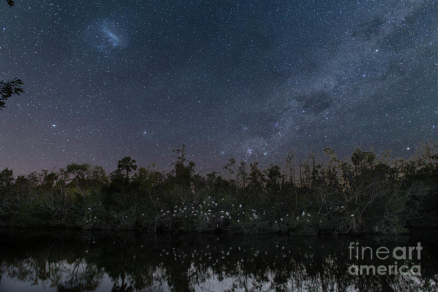 Starry Night - Bird Sanctuary Photograph