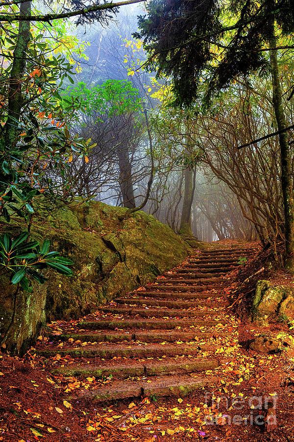 Step Into the Autumn Fog by Dan Carmichael