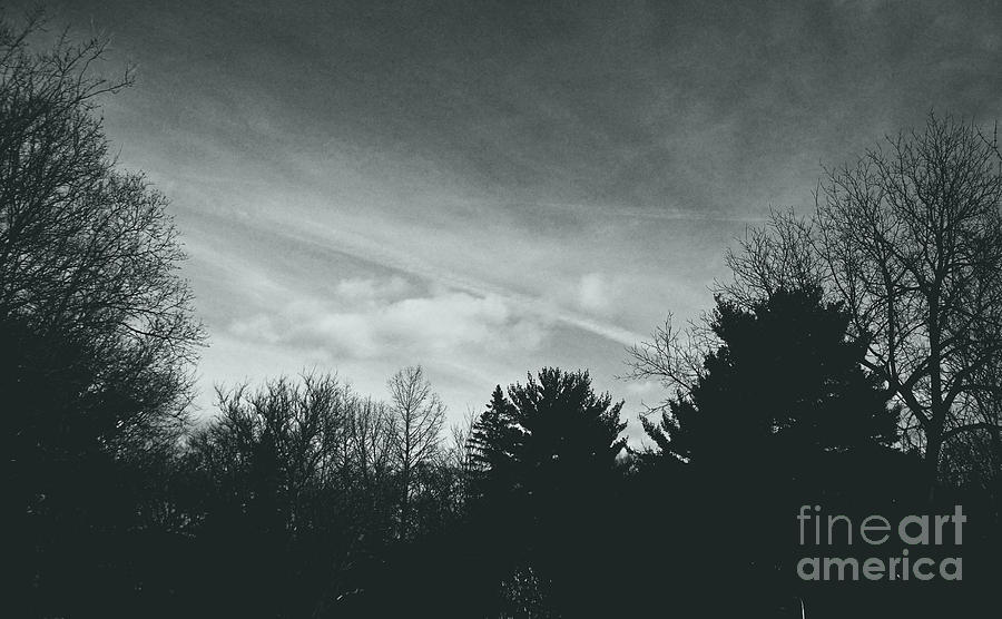 Landscape Photograph - Storm Above the Pine - Silver by Frank J Casella