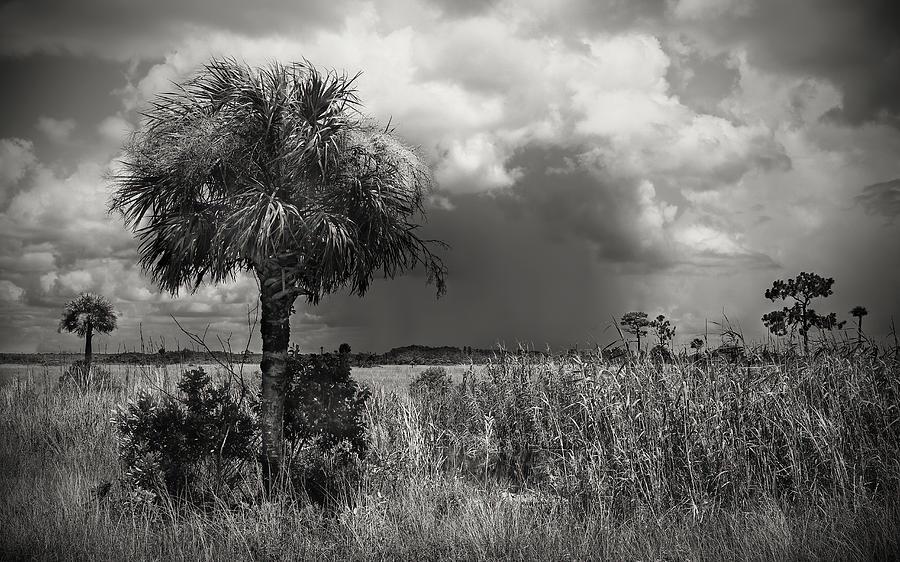 Storm Over Big Cypress - 1 Photograph