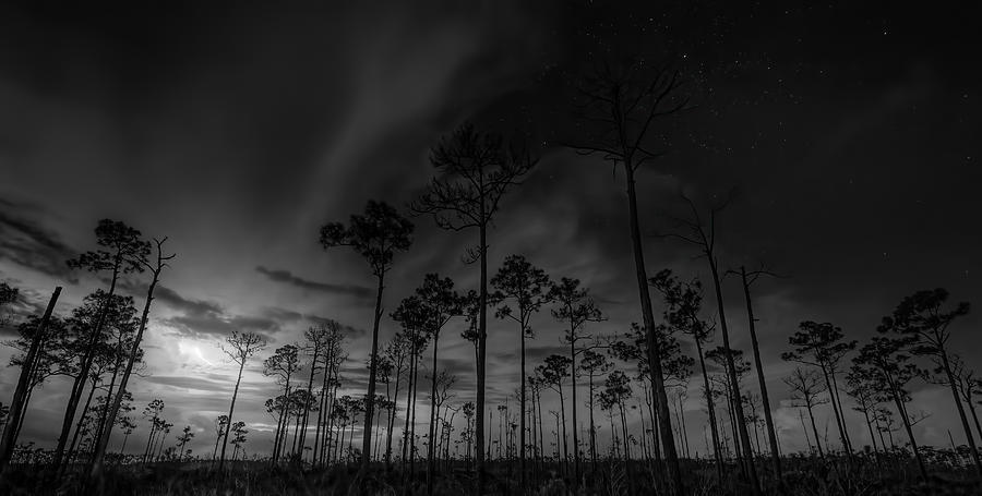 Everglades National Park Photograph - Storms In The Cypress Forest by Mark Andrew Thomas