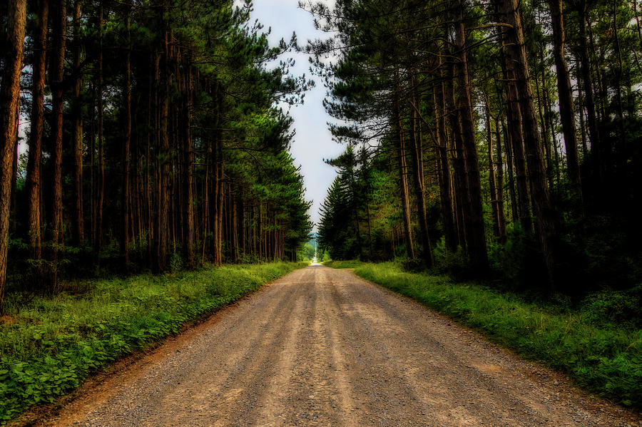 Straight road through pine forest by Dan Friend