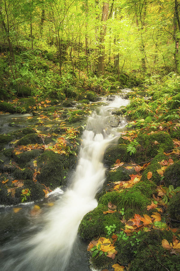 Stream In Colourful Leaves Photograph