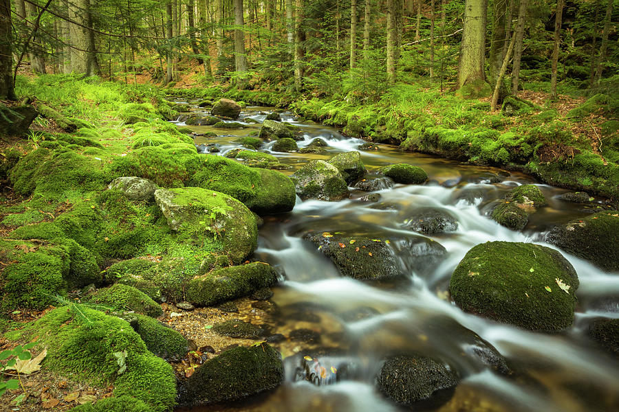 Waterfall Photograph - Stream in the Forest by Tobias Luxberg