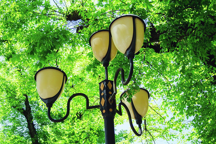 Street Chandelier In The Most Romantic Park Targu Mures Romania Photograph