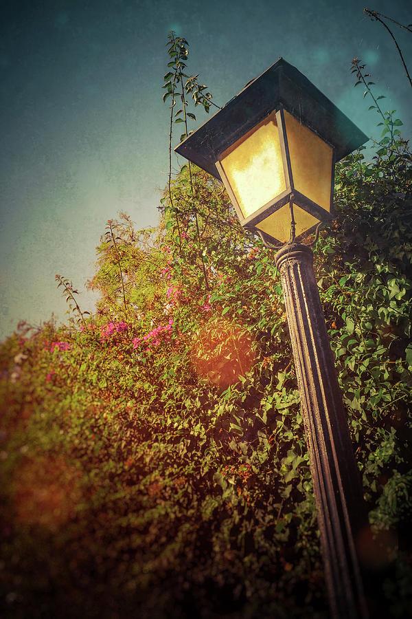 Street Lamp by Carlos Caetano