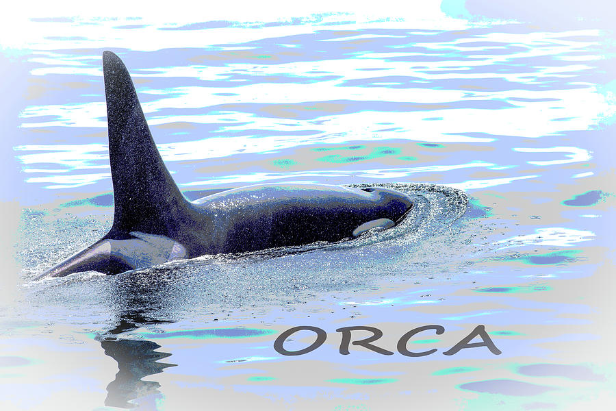 Stylized image of an Orca taking a breath of air by Kyle Lee