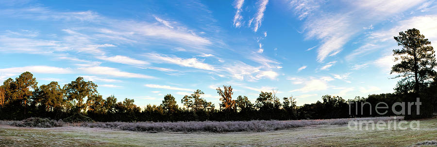 Winter Photograph - Subtropical Florida Winter With Frosted Bushes At Sunrise by Felix Lai