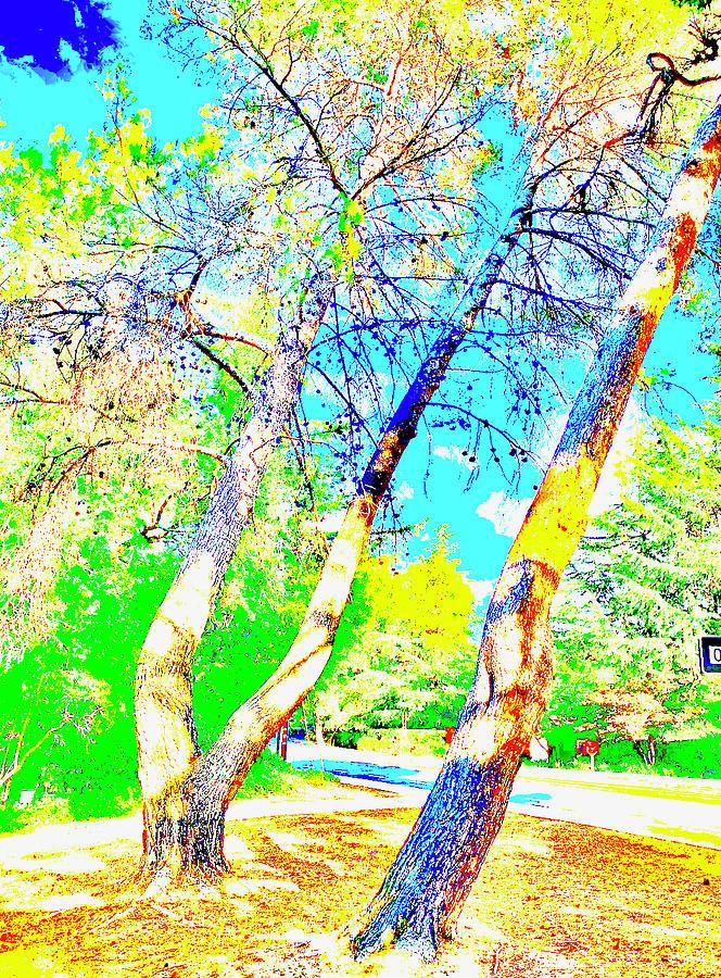 Suburban Native Pines Photograph