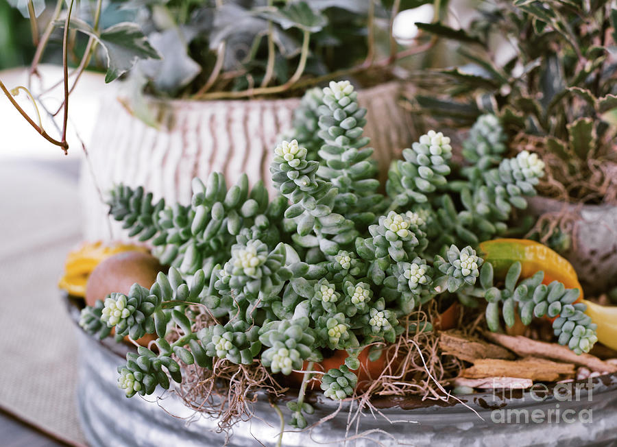 Succulents 2 by Andrea Anderegg