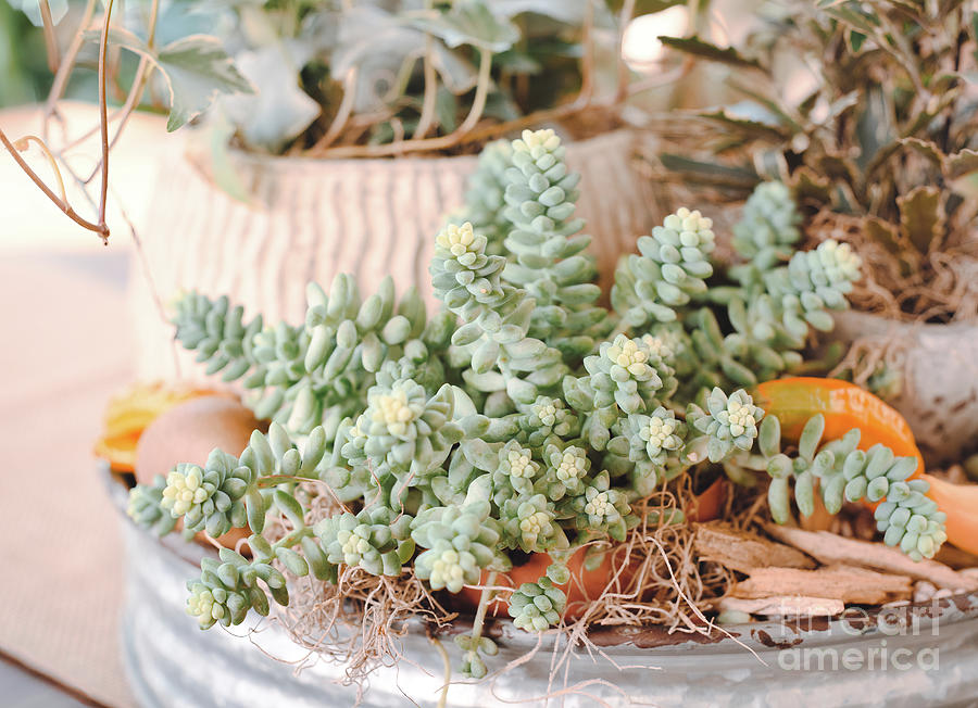 Succulents by Andrea Anderegg