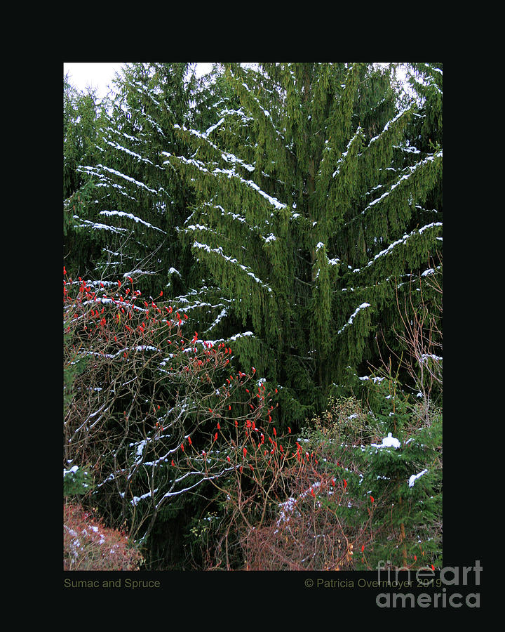 Sumac and Spruce by Patricia Overmoyer