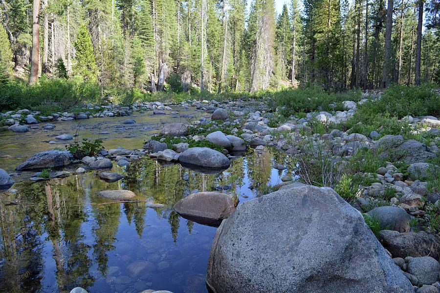 Summer At Dinkey Creek Photograph