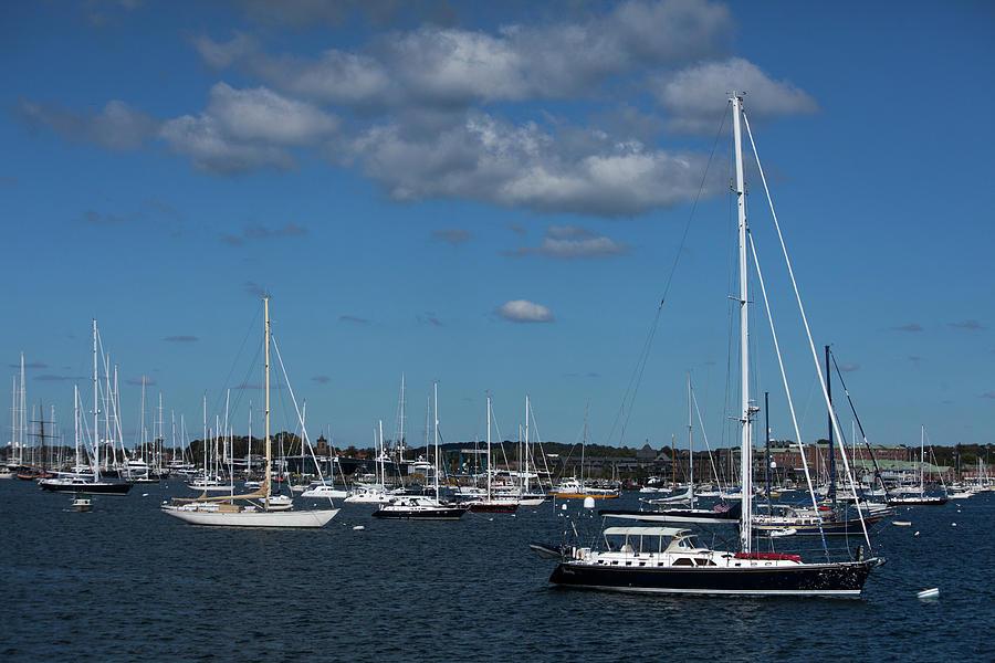 Summer at the Harbor by Karol Livote