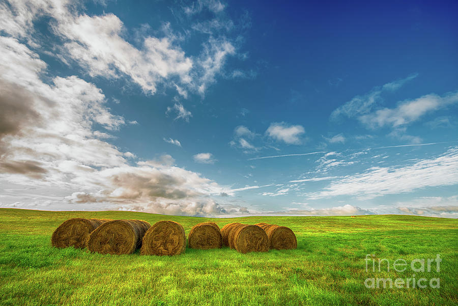 Canada Photograph - Summer Bales by Ian McGregor