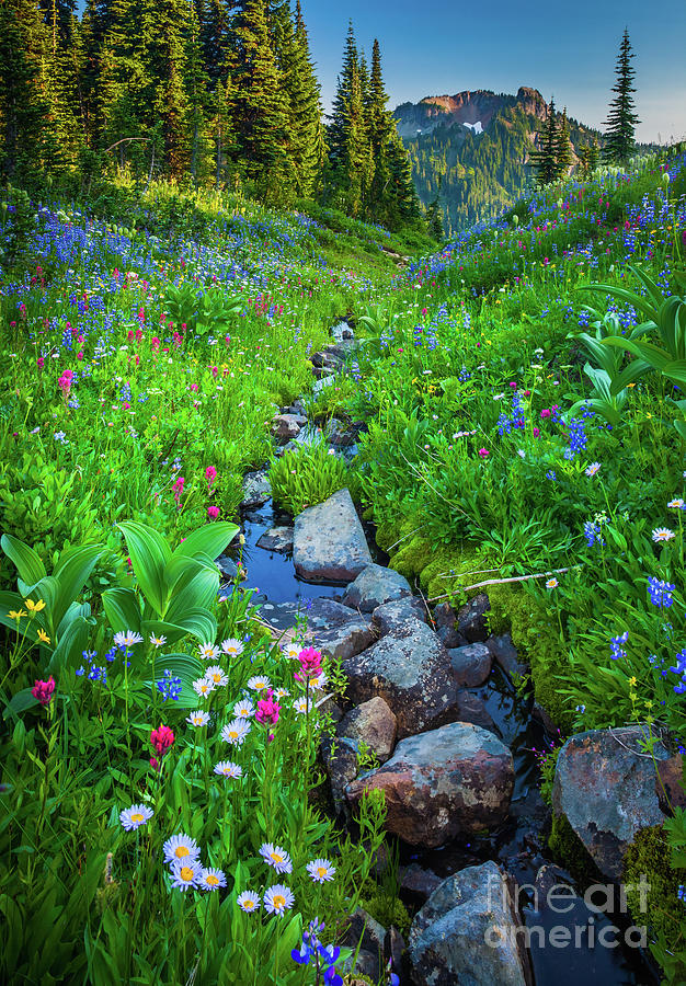 America Photograph - Summer Creek by Inge Johnsson